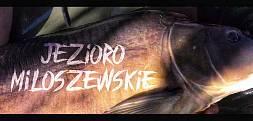 Karp z Miłoszewskiego, Jezioro Miłoszewskie-majówka 2019