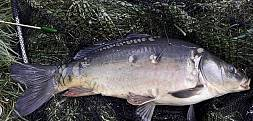 Pierwsze rybki w tym sezonie
