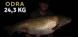 Amur 24,3 kg z Rzeki Odry