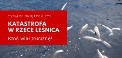 Ktoś wlał truciznę do rzeki Leśnicy. Straty to kilkadziesiąt ton martwych ryb